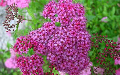 10 Best Fastgrowing Shrubs For Instant Garden Impact