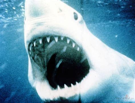 Žokļi (Jaws) | Filmas oHo.lv