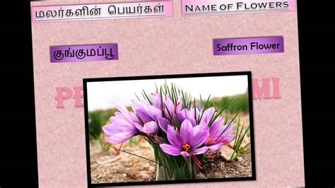 flowers  tamil part iii youtube
