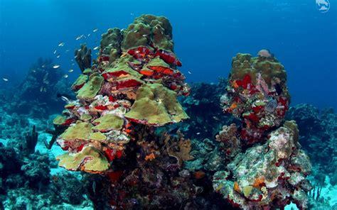 underwater avila beach hotel curacao