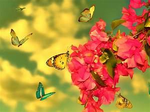 Wallpaper, Hd, Butterfly, Hd, Wallpapers, Wallpapers, Download