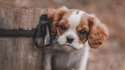 Wallpapers 4k Puppy Puppies Animals Background Dog