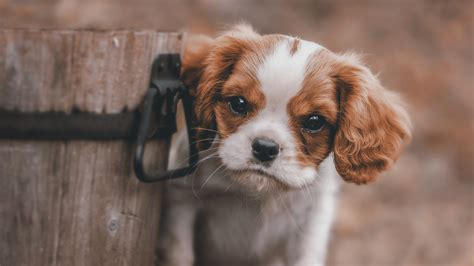 Download and use 30,000+ 4k wallpaper stock photos for free. Cute Puppy 4k dog wallpapers, cute wallpapers, animals wallpapers