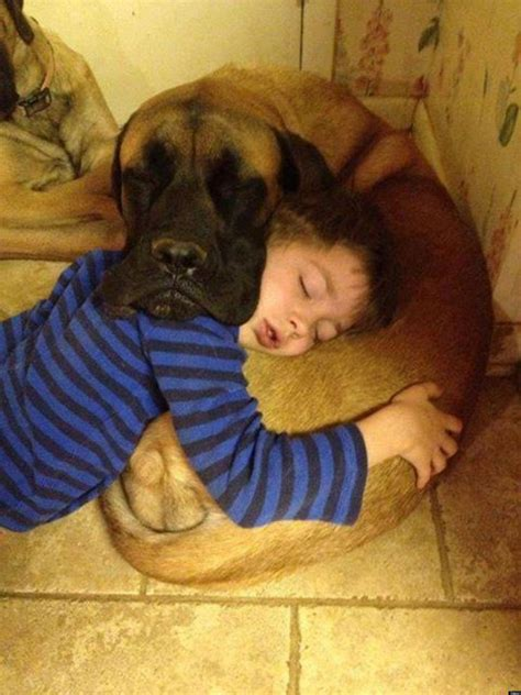 Sleep And Pets by Dogs And Babies Sleeping Are What The World Needs Now