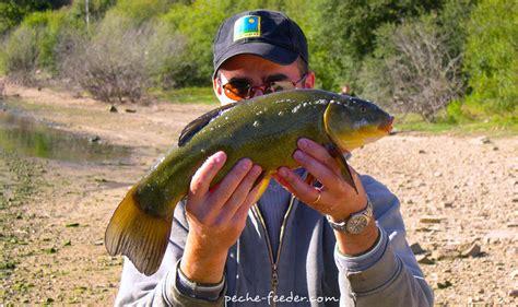 comment pêcher la tanche au feeder