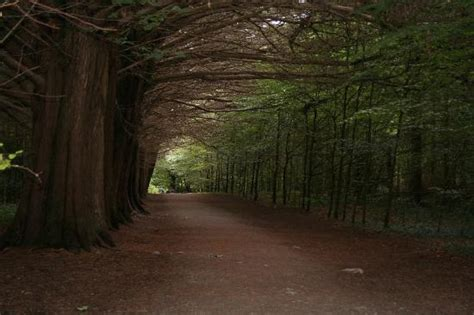 Coole Park (Gort, Ireland): Top Tips Before You Go   TripAdvisor