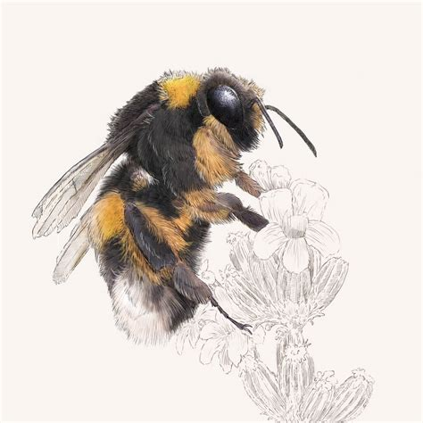 Bumblebee Print By Ben Rothery Illustrator ...