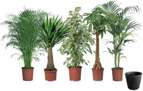 Garten Pflanzen Toom by Gro 223 Pflanzen Toom Ansehen