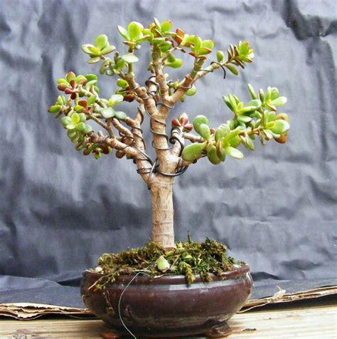 22 Best Trees For Bonsai  Best Bonsai Plants Balcony