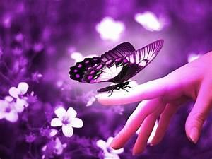Purple butterflies wallpaper |Funny Animal