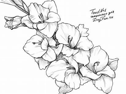 Gladiolus Flower Tattoo Flowers Drawing Tattoos Birth