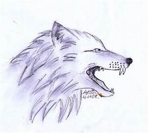 Wolf Head Snarling Sketch by QuietFawn-SkyWolf on DeviantArt