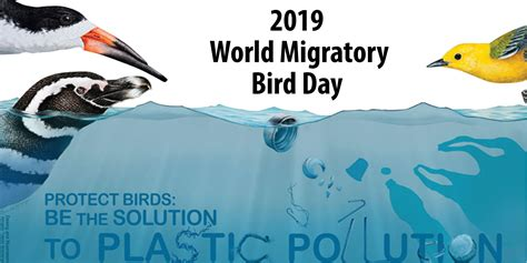 world migratory bird day qualads