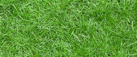All You Need To Know About Zoysia Grass
