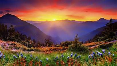 Zealand Landscape Nature Sunrise Mountain Autumn Flower