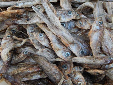 ugandan fish heritage    time  slow fish
