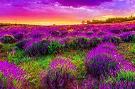 Beautiful Spring Flowers Desktop