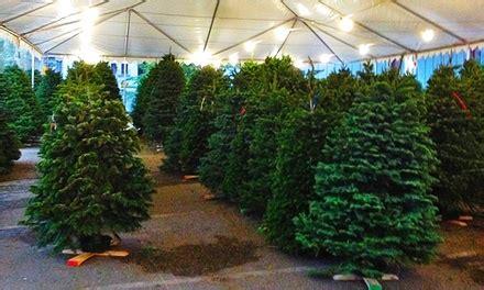 denver christmas trees mr jingles christmas trees in littleton co groupon 3074