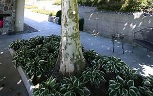 baum pflanzen kaufen lebensbaum hecke thuja smaragd 1 With feuerstelle garten mit aquarium bonsai baum kaufen