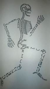 I Wish This Diagram Had Been In My Anatomy Book  Would