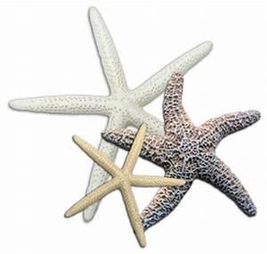 Where to Buy Seashells, Driftwood, and Nautical Craft