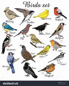 big set birds. birds flying, animals, bird silhouette ...