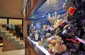 footballers-pad-bespoke-aquarium-ideas-by-aquarium