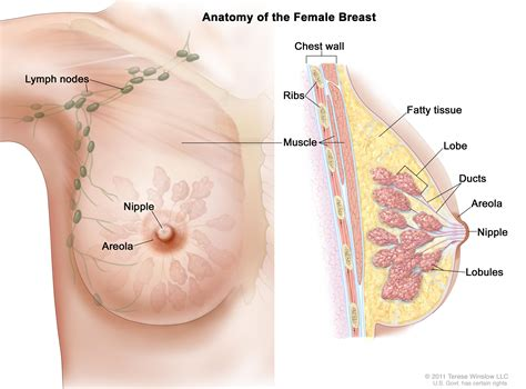 Breast Cancer Prevention Pdqpatient Version National