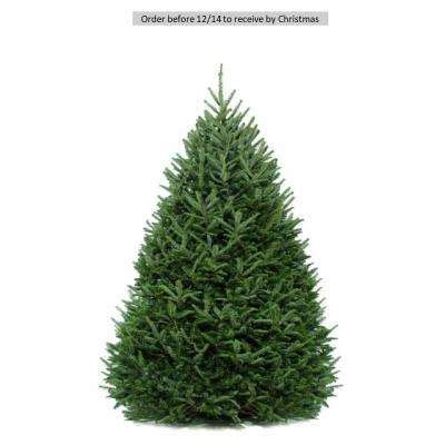 home depot christmas tree prices real trees trees the home depot