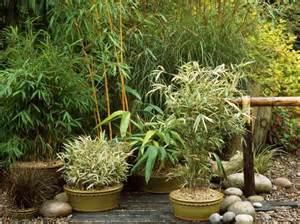 Pot Plants For Patios by Asian Inspired Container Garden Hgtv