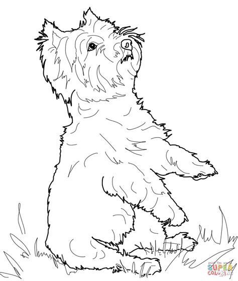 mini cuccioli da colorare terrier or yorkie coloring page free printable
