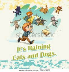 raining cats and dogs raining cats and dogs stock images royalty free images