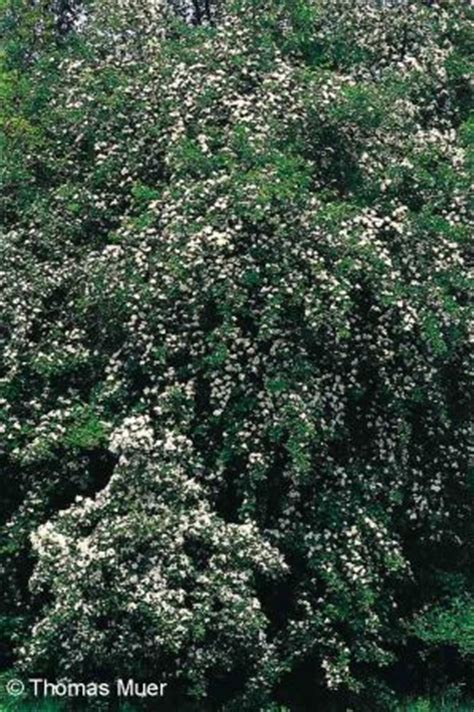 Einheimische Bäume Für Den Garten  Gartenhaus Gebraucht
