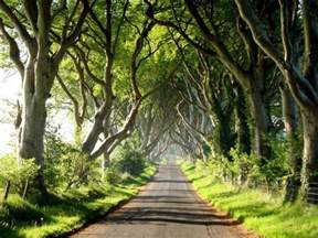 amazing tree tunnel in the northern ireland 18 pics izismile