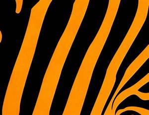 Tiger Background Free Stock Photo - Public Domain Pictures
