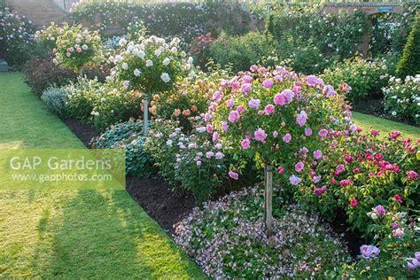gap gardens walled rose garden mixed border  shrub