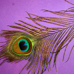 Peacock, Feather, Stencil, Large