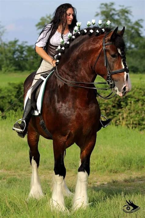 shire horses draft horse stallion woman riding clydesdale gorgeous facts horseback rider cowgirl percheron cow ass