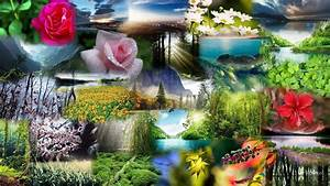 Natural Beauty Wallpapers