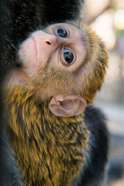 monkey   month  monkey   white beard