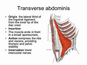 What Is Your Transverse Abdominis
