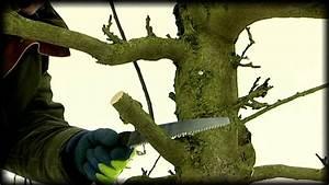 Taille De Cerisier : la taille des arbres fruitiers avec fr d ric tailler youtube ~ Melissatoandfro.com Idées de Décoration