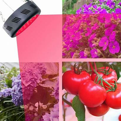 Led Hydroponic Gardening Grow Lights Spectrum Bulbs
