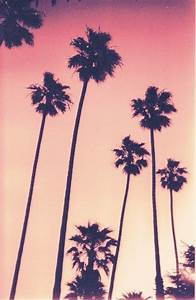 palm tree sunset | iPhone Backgrounds | Pinterest | Trees ...