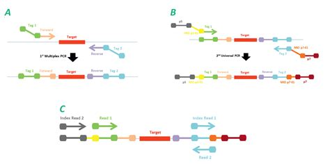 illumina ngs sequencing eligene 174 kits for next generation sequencing