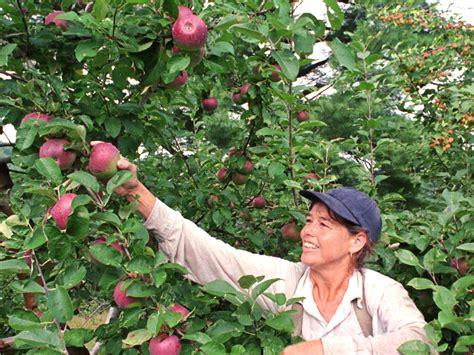 apple picking cbs baltimore