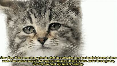 Cat Sad Kitty Gifs Memesbams Funny Animated