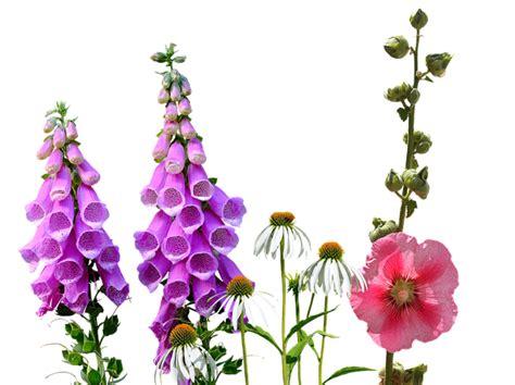 photo wildflowers larkspur wild flowers summer meadow