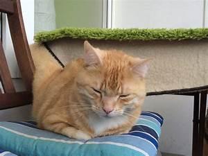 Flöhe Bei Katzen Bekämpfen : wie kann man fl he bei katzen behandeln katzengesundheit katzen katzen fl he und fl he ~ Orissabook.com Haus und Dekorationen