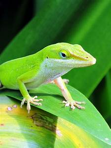 Good Reptiles And Amphibians For The Garden